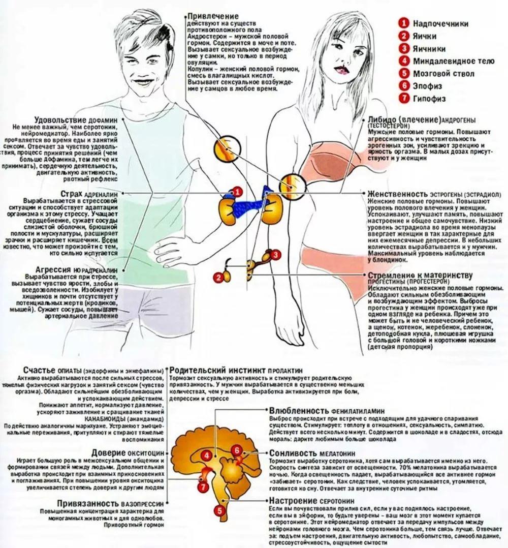noviy-seksualniy-partner-i-problemi-s-gormonami